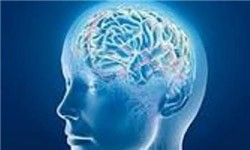 اخبار,اخبار علمی,مغز
