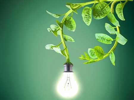 اخبار,اخبار علمی,تولید برق از گیاهان زنده