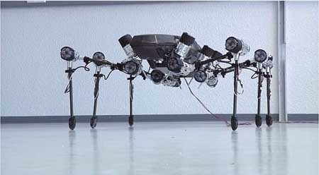 اخبار , اخبار علمی , روبات حشره