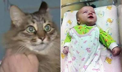 اخبار,اخبار گوناگون,گربه