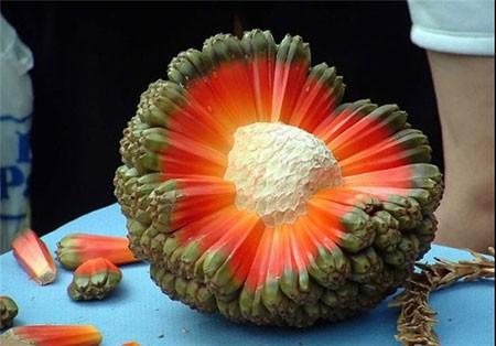 اخبار,اخبارگوناگون ,عجیبترین میوهها و سبزیجات