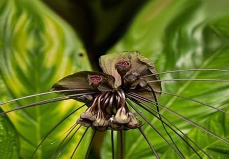اخبار , اخبار گوناگون,تصاویر گیاهان عجیب وغریب,گیاهان عجیب و غریب