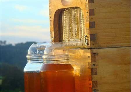 اخبار,اخبار گوناگون ,پرورشدهنده زنبور عسل
