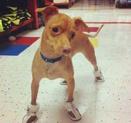 اخبار,اخبار گوناگون , زشت ترین سگ دنیا