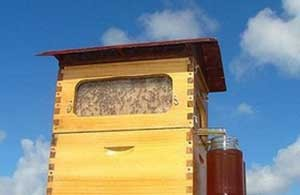 تولید عسل با گردش یک کلید فناورانه در کندو