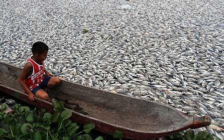 عکسهای جالب,عکسهای جذاب,ماهی های مرده