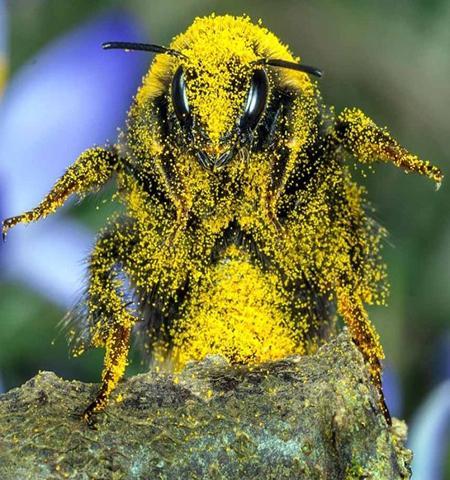 تصاویر دیدنی,تصاویر جالب,زنبورعسل