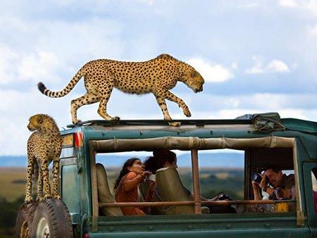 عکسهای جالب,تصاویر دیدنی,پارک حیات وحش