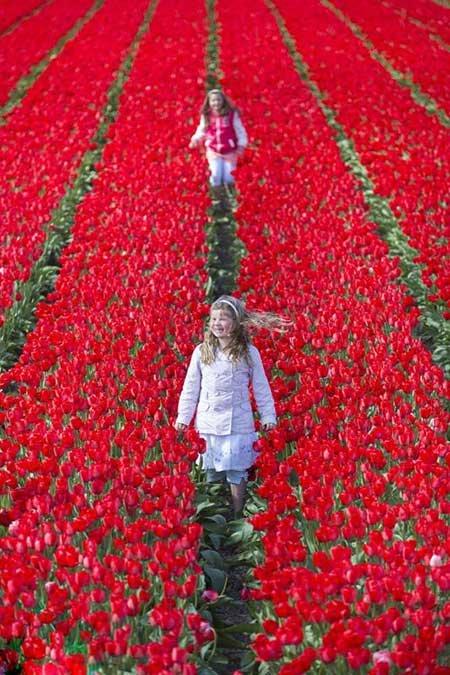 عکسهای جالب,تصاویر جالب,گل های زیبا