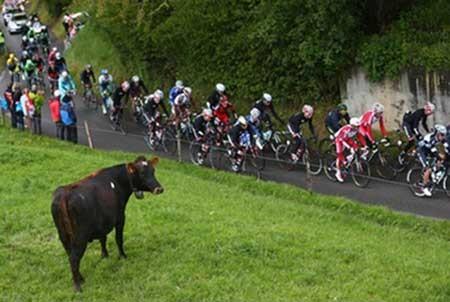 تصاویر دیدنی,تصاویر جالب,دوچرخه سواری