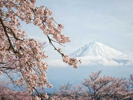 عکسهای جالب,تصاویر دیدنی,شکوفه های بهاری