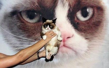 عکسهای جالب,گربه ,تصاویر دیدنی