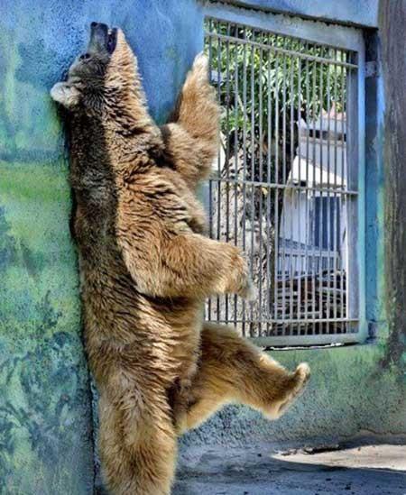 عکسهای جالب,خرس در باغ وحش,تصاویر جالب