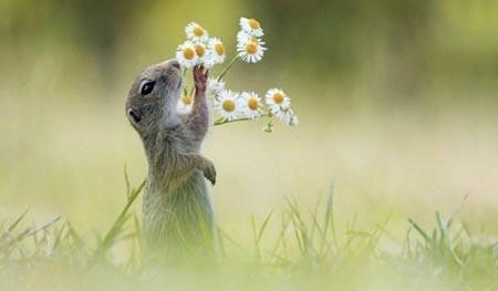 عکسهای جالب,سنجاب,تصاویر جالب