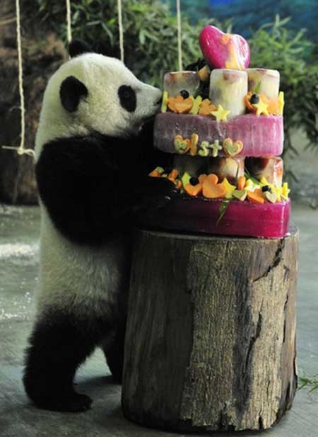 تصاویر دیدنی,تصاویر جالب,جشن تولد پاندا