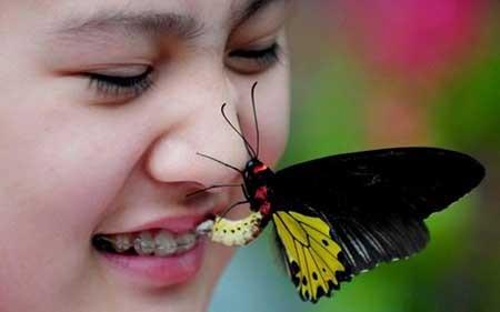 عکسهای جالب,پروانه,تصاویر دیدنی