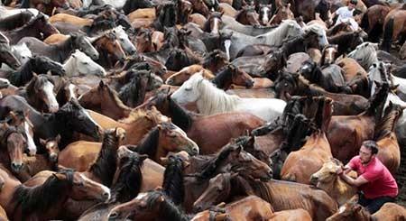 دعوای اسب ها,تصاویر دیدنی,تصاویر جالب