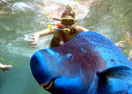 عکسهای جالب,طوطی ماهی,تصاویر دیدنی