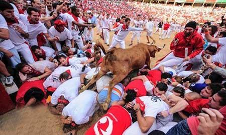 تصاویر دیدنی,مسابقات پرش گاوها,تصاویر جالب