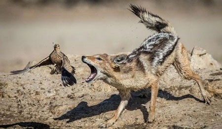 عکسهای جالب, چرخه ی حیات وحش ,تصاویر دیدنی