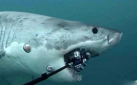 تصاویر دیدنی, فیلم برداری زیر دریا,تصاویر جالب