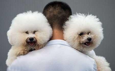 نمایش سگ ها,تصاویر دیدنی,تصاویر جالب