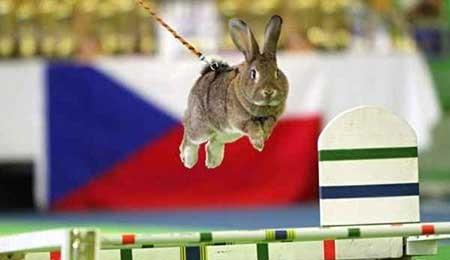 عکسهای جالب,خرگوش ,تصاویر جالب