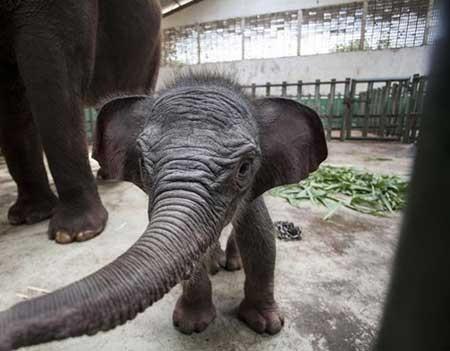 تصاویر دیدنی,فیل , تصاویر جالب