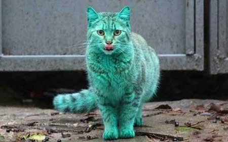 عکسهای جالب,گربه, تصاویر جالب