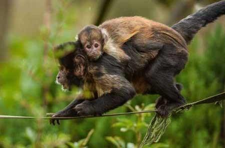 تصاویر دیدنی,میمون,تصاویر جالب