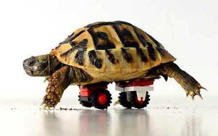 عکسهای جالب,لاکپشت,تصاویر جالب