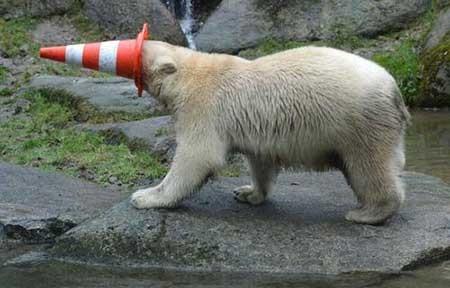 تصاویر دیدنی,خرس قطبی,تصاویر جالب