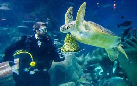 تصاویر دیدنی, لاکپشت ,تصاویر جالب