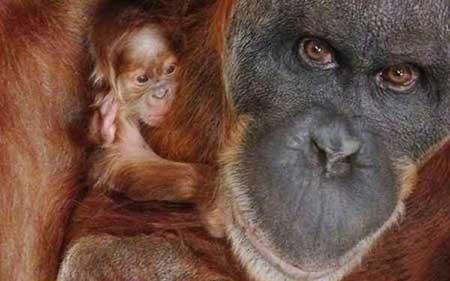 عکسهای جالب, باغ وحش,تصاویر جالب