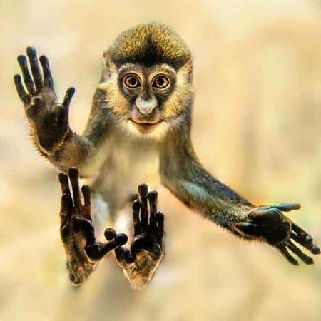 تصاویر دیدنی,میمون سنجابی,تصاویر جالب