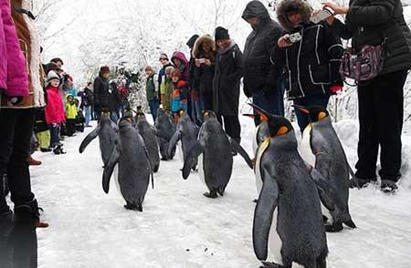 عکسهای جالب,پنگوئن ,عکسهای جذاب (http://www.oojal.rzb.ir/post/1544)
