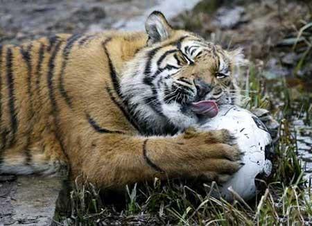 عکسهای جالب, باغ وحش,تصاویر دیدنی