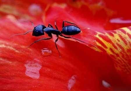 عکسهای جالب,مورچه,تصاویر جالب