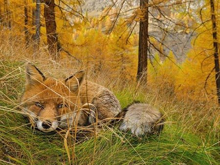 عکسهای جالب,پارک ملی,عکسهای جذاب