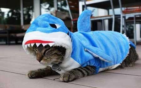 عکسهای جالب,گربه,تصاویر جالب
