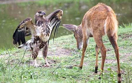 عکسهای جالب,عقاب,تصاویر جالب