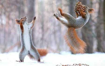 عکسهای جالب,سنجاب ,تصاویر جالب
