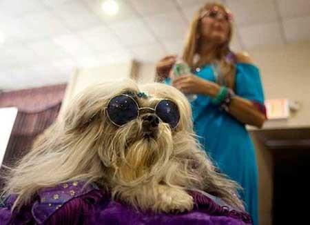 عکسهای جالب,فشن شوی سگ ها,تصاویر دیدنی
