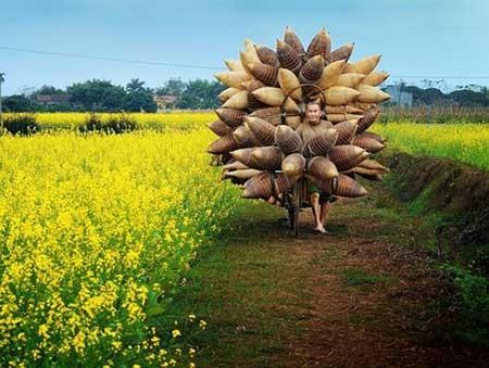 تصاویر دیدنی,چوب بامبو,تصاویر جالب