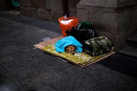 عکسهای جالب,سگ یک بی خانمان,عکسهای جذاب