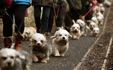 عکسهای جالب,سگ های  نادر,تصاویر جالب