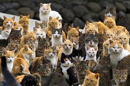 عکسهای جالب,شهر گربه ها ,عکسهای جذاب