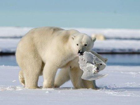 عکسهای جالب,خرس قطبی,تصاویر دیدنی