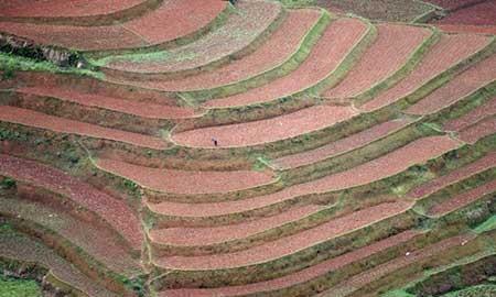 عکسهای جالب,کاشتن بذر,تصاویر جالب