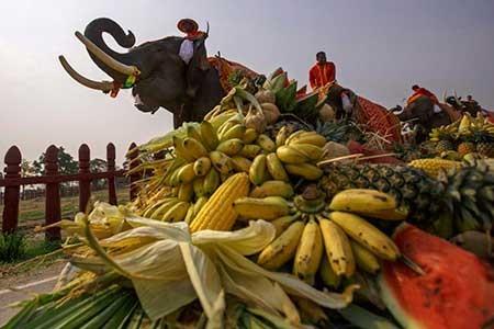 عکسهای جالب, فیل,تصاویر دیدنی
